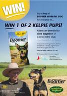 Win 1 of 2 kelpie pups